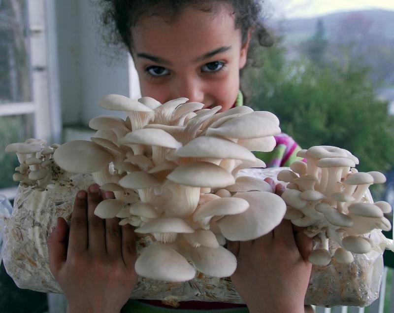 mushroom woman poc