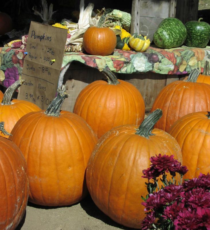 pumpkin winter vegetable