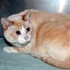 its adopt a senior pet month