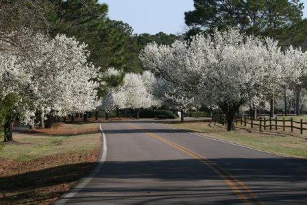 Hilton Head Spring Bloom