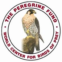 Peregrine Fundo Logo