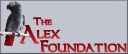 alex foundation