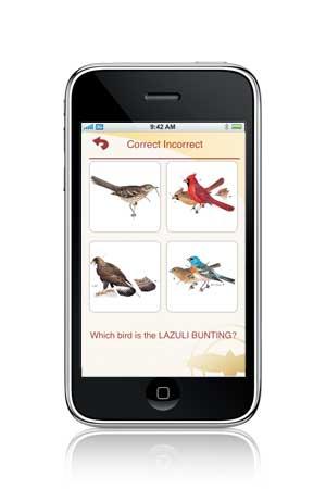4 bird quiz