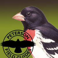 Peterson_Songbirds