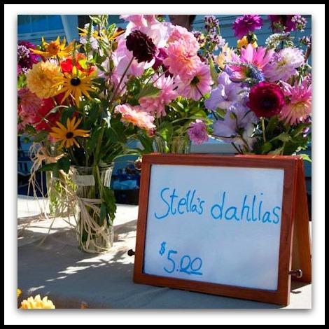 FICRA Fair 2011 Dahlias