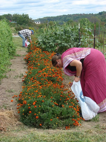 Mia and Balabhadra picking marigolds.