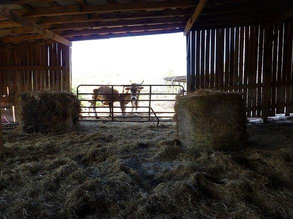 Geriatric barn without door