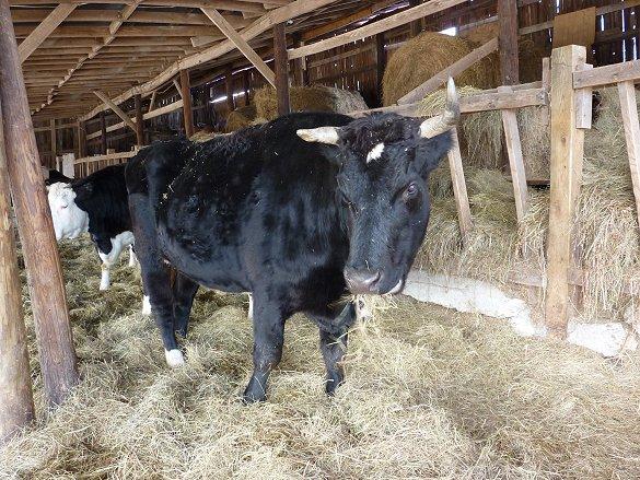 Cozy in the barn