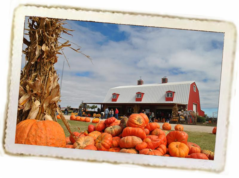 Assiter Punkin Ranch & Pumpkin Barn