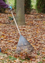 Mark's Choice rake