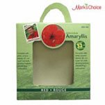 Amaryllis kit