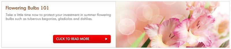 Flowering bulbs 101