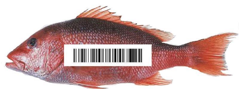 SeafoodID