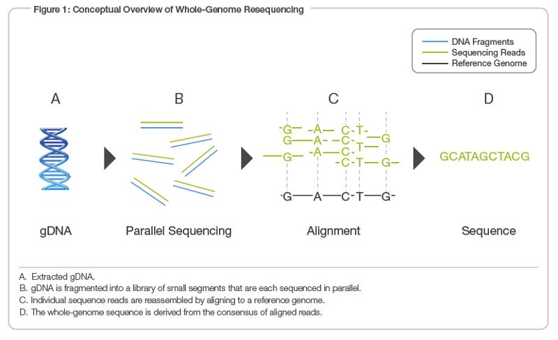 Genomic Sequencing