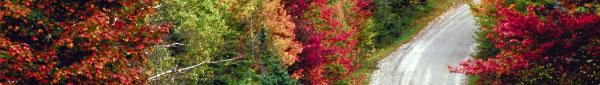autumn-winding-road.jpg