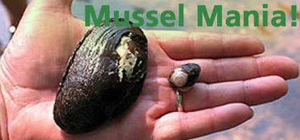 Mussel Mania