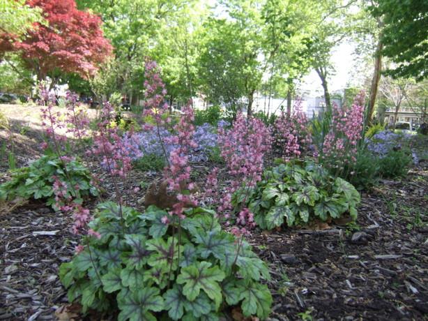 Vernon Park Rain Garden