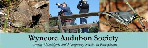 Wyncote Audubon