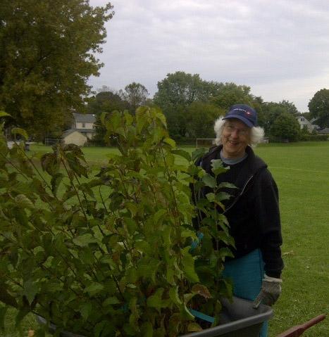 Buffer planting