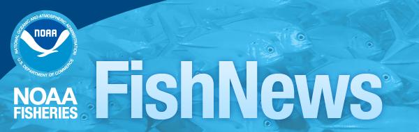 FishNews banner