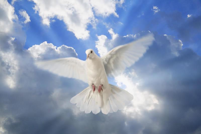 white dove test