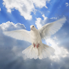 A white dove--a symbol of the 'journey though hope and healing' our women are experiencing.