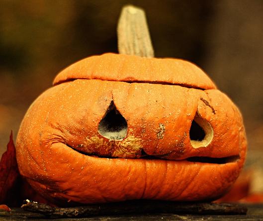 pumpkin wrinkles