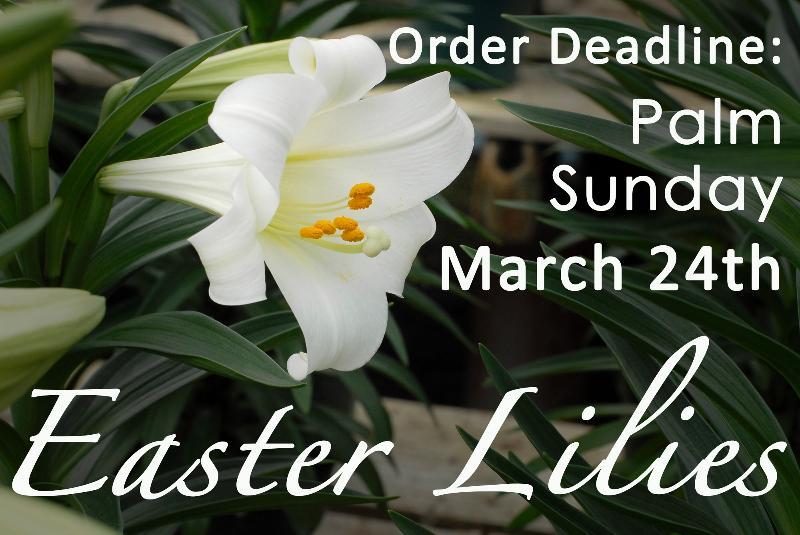Lilies Order Deadline