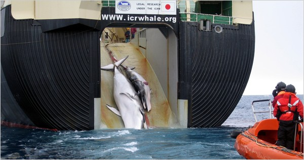 Dead Whale Mother & Calf