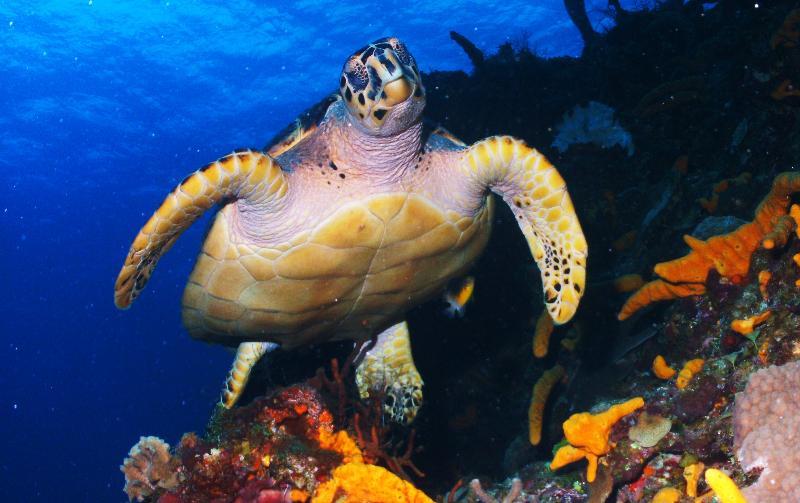 HB Turtle, Cozumel
