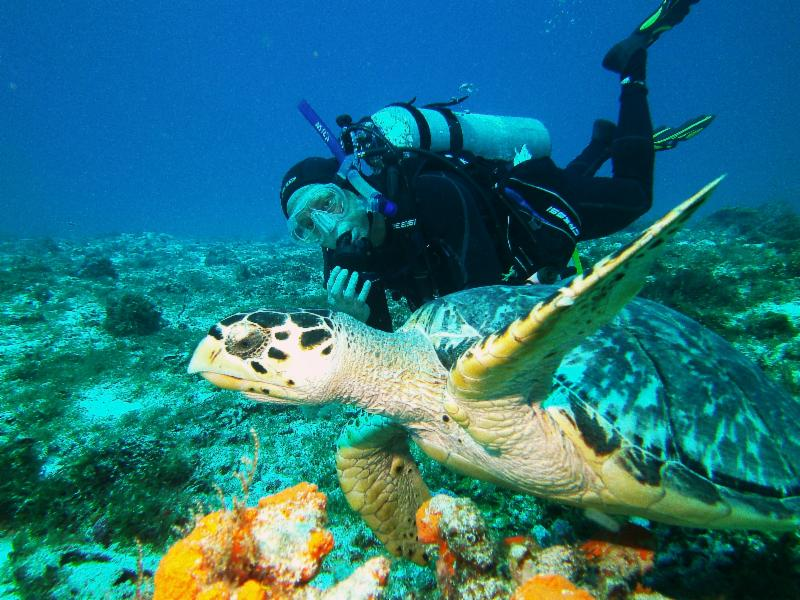 Paul with a hawksbill turtle