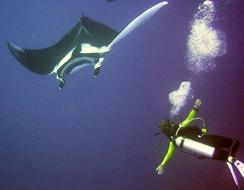 Diver and Giant Manta Ray