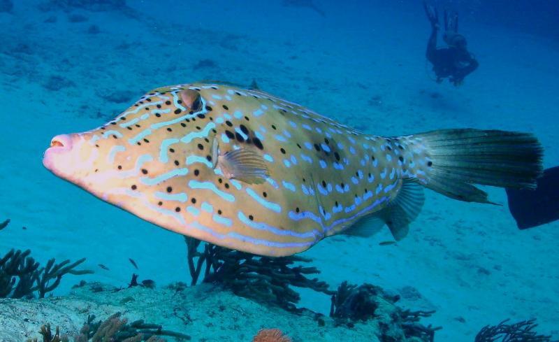 filefish eye shot