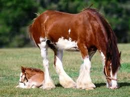 Clyde n Foal