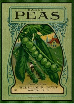pea seed packet final