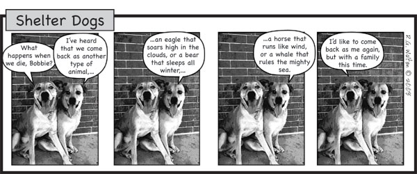 Shelter Dogs cartoon
