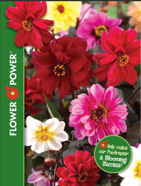 Flower Power flowers