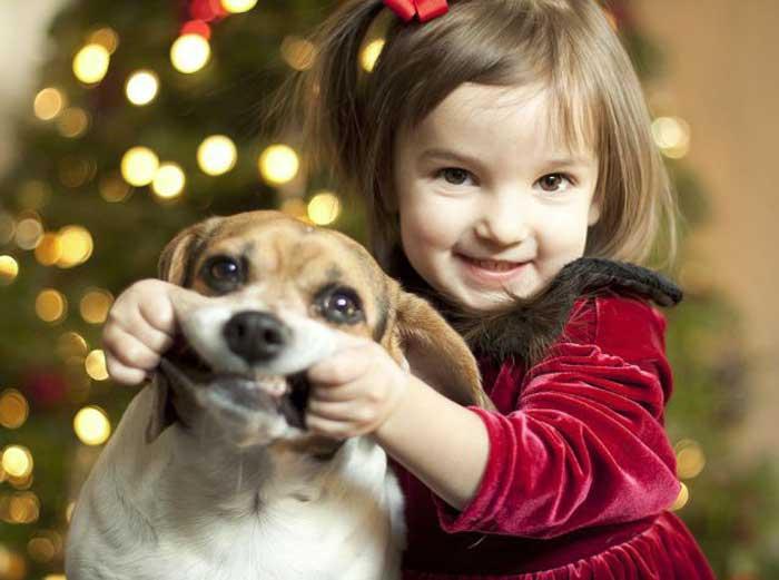 Donors beagle