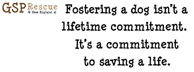 foster logo