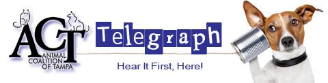 Telegraph Header