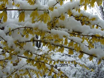 Melting Snow 2