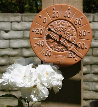Thermometer and white flowers