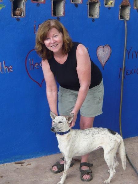 Serape Rescue Dog