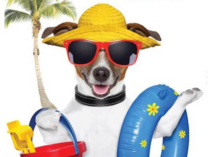 Beach Dog Boarding & Salon