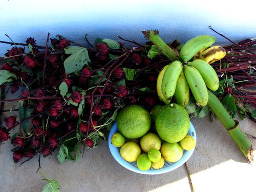 TPA A Bouquet of Jamaica