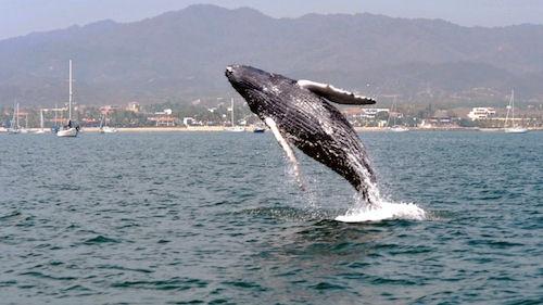 RN Whale Watching Season