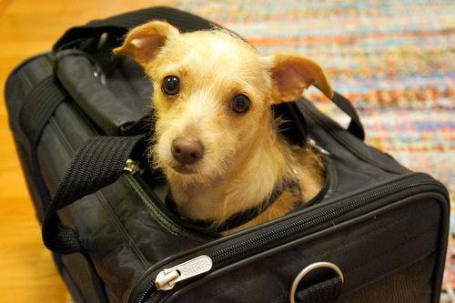 New Pet Travel Info