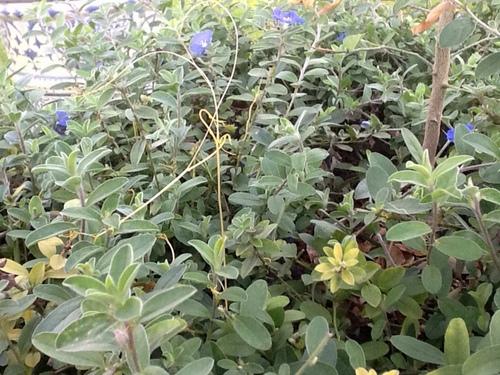 Plaga in My Garden
