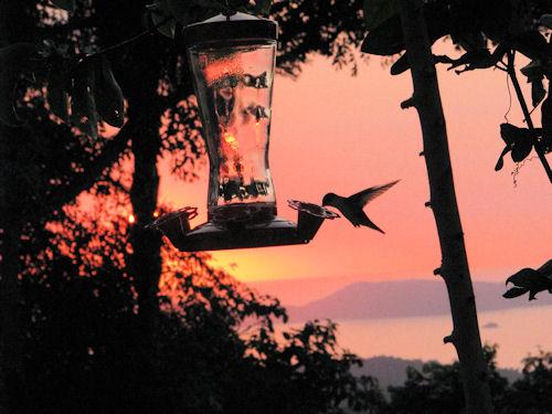 TPA Sunset with hummingbird