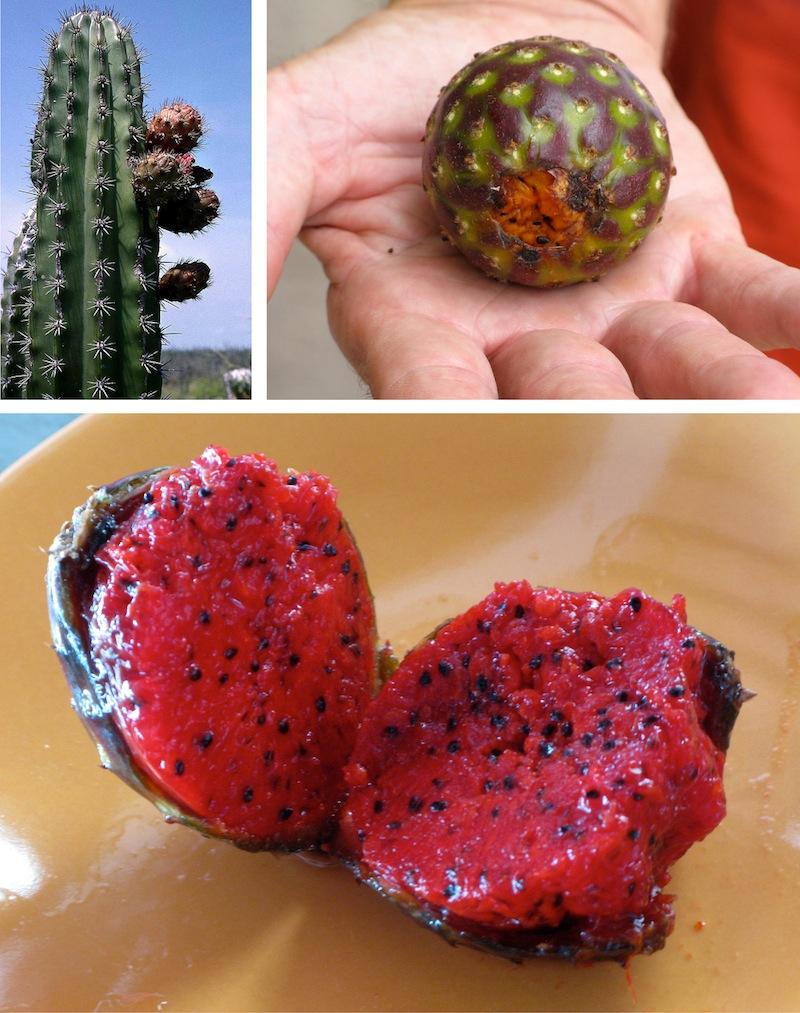 Pataya Fruit